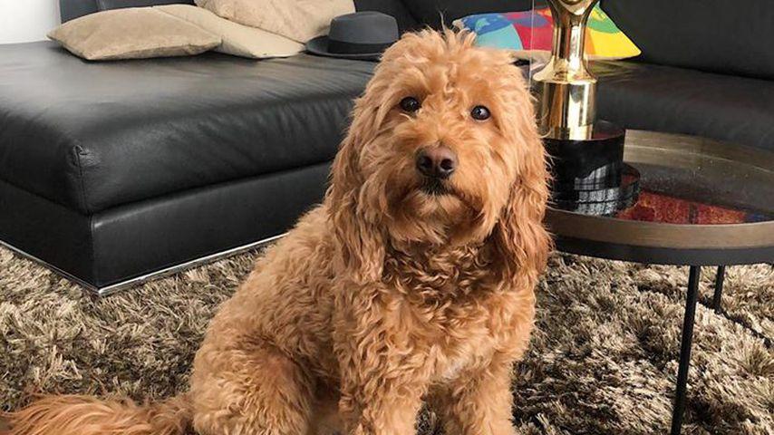 Der Hund von Massimo Sinató und Rebecca Mir