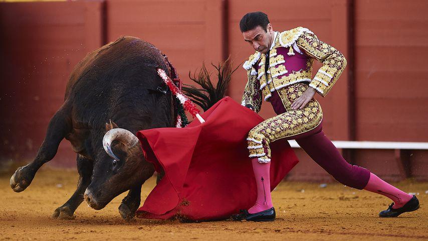 Enrique Ponce, Stierkämpfer