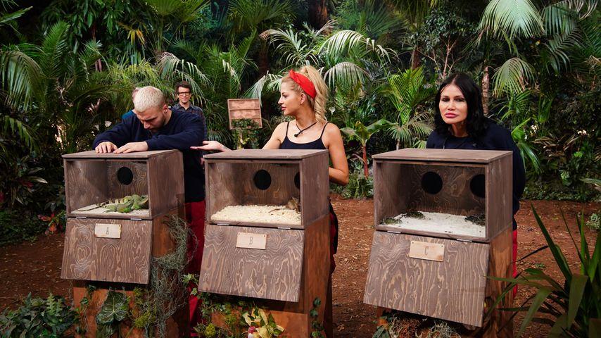 Filip, Xenia und Djamila am zwölften Dschungelshow-Tag