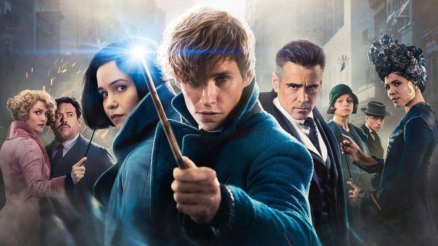 """1. Sequel-News: So geht's mit """"Fantastic Beasts"""" weiter!"""