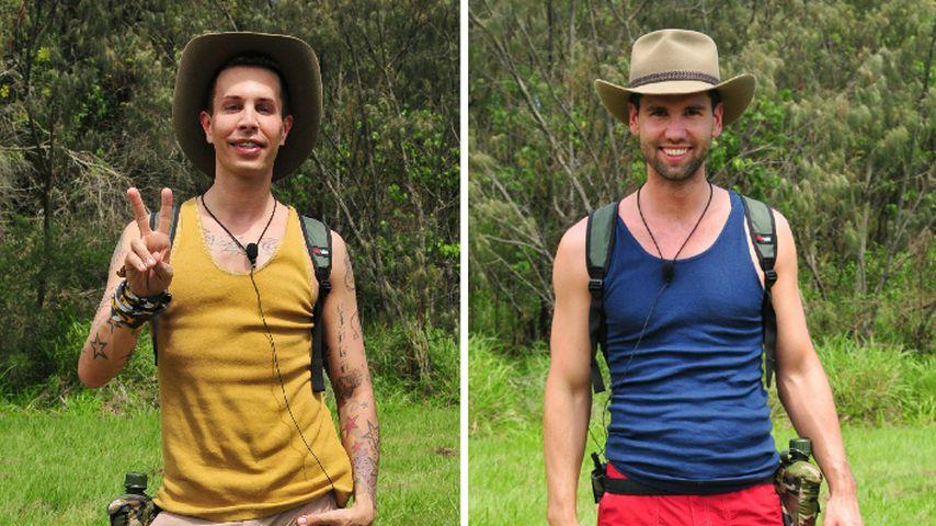 Florian Wess vs. Honey: Showdown in der Dschungelprüfung!
