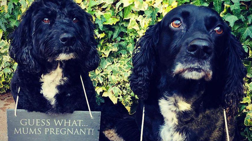 Gemma Atkinsons Hunde Norman und Ollie