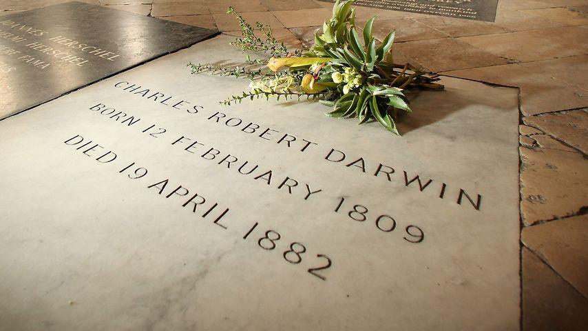 Grabstätte von Charles Darwin in der Westminster Abbey in London
