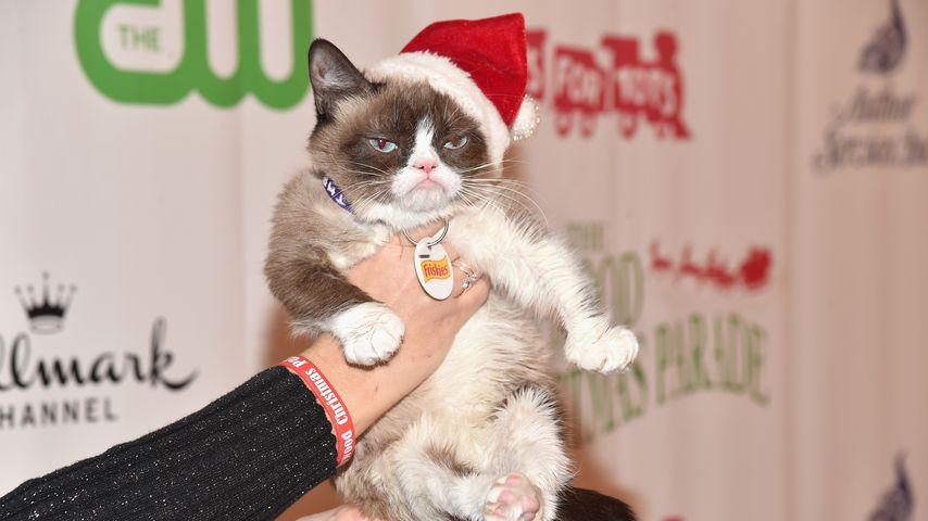 Motzige Weihnachten! Grumpy Cat ist der Grinch der Tierwelt