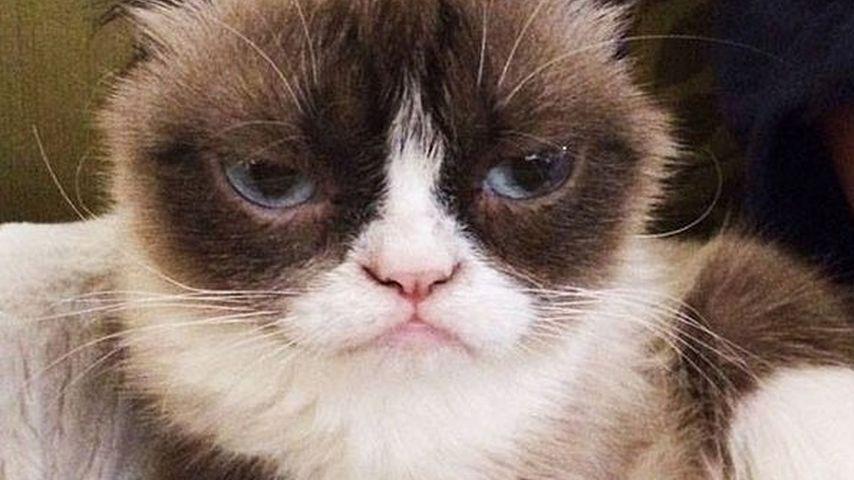 Glückliche Besitzerin: Dank Grumpy Cat Multimillionärin