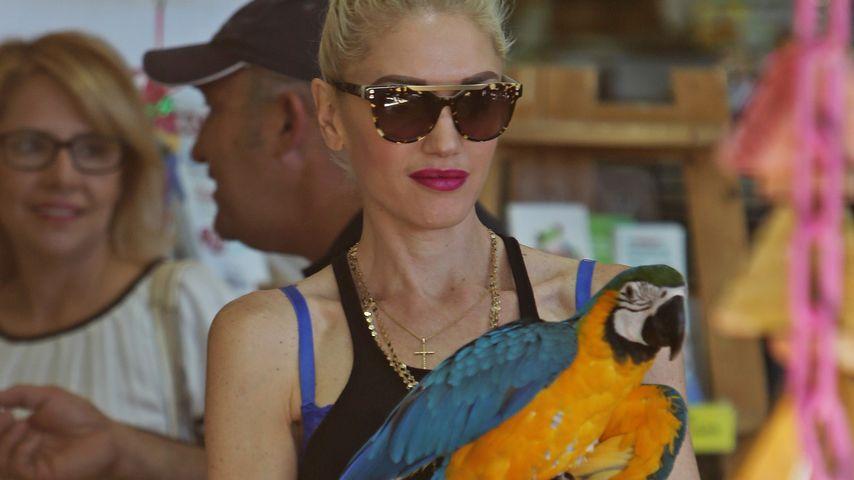 Schräg: Gwen Stefani schenkt ihren Kindern einen Papagei!
