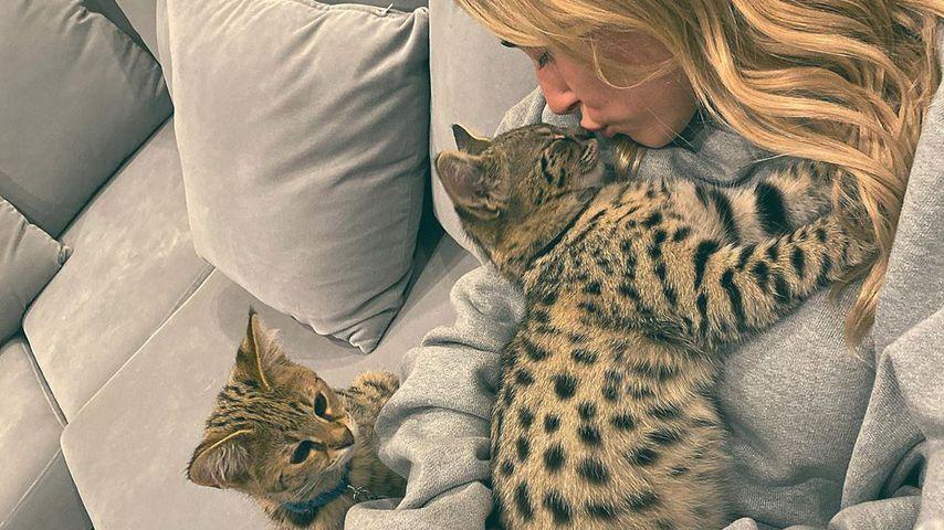 Hailey Bieber mit ihrem Hund und ihren Katzen