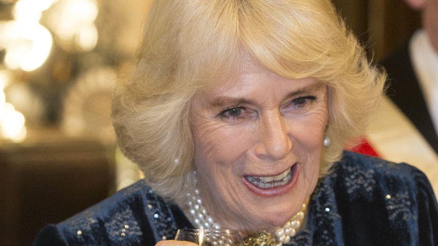 Herzogin Camilla, 2019