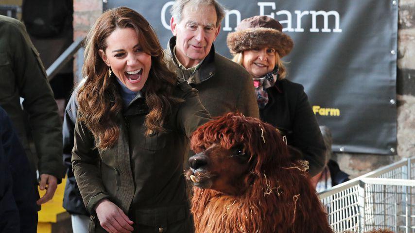 Auf Alpaka-Tuchfühlung: Herzogin Kate besucht Nordirland