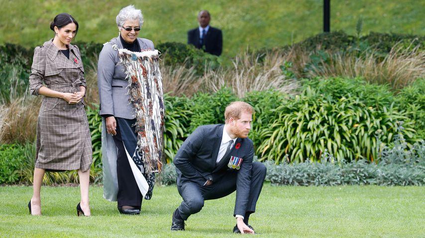 Tolle Bodenakrobatik: Prinz Harry tanzt traditionellen Haka!