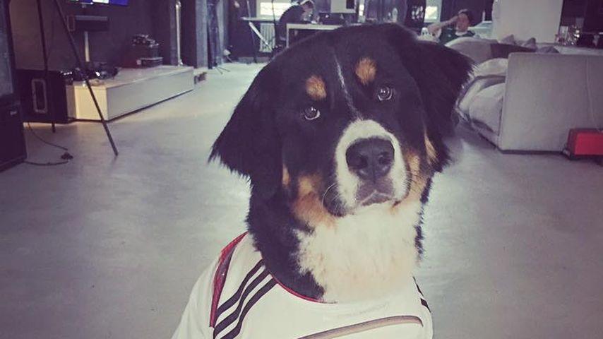 Jan Leyks Hund Bruno ist auch ein Fußballfan