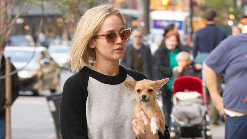 Jennifer Lawrence mit ihrem Hund Pippi in New York