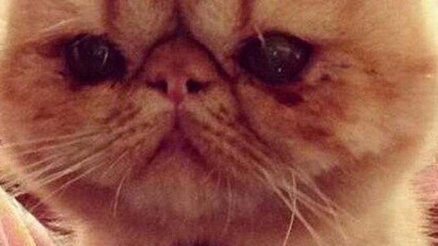 Verrückt: Justin Biebers süße Katze Tuts twittert!