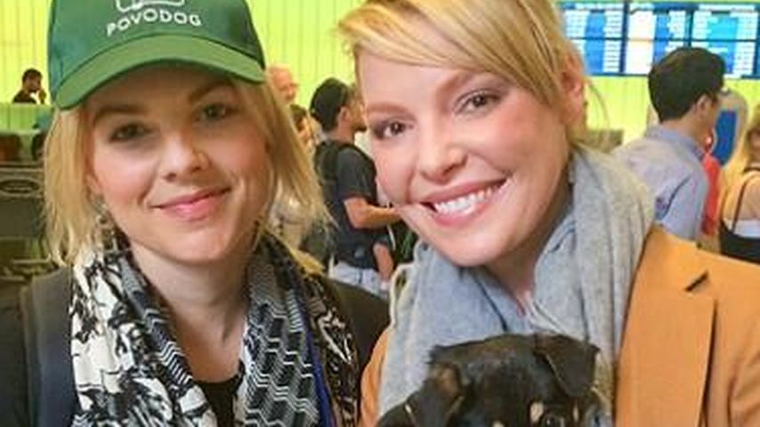 Katherine Heigl hilft Hunde-Welpen aus Sotschi
