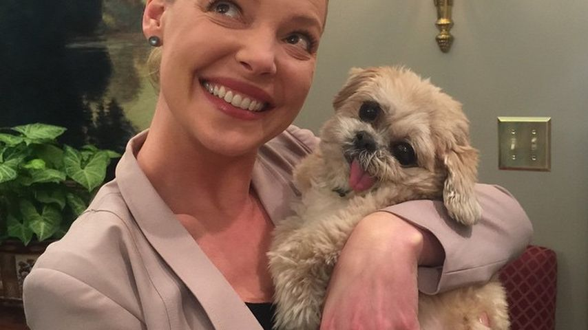 Stars im Kuschel-Fieber: Wer ist Marnie The Dog?