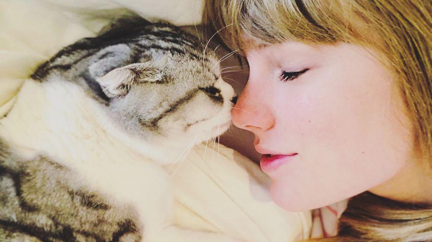 Katzen-Liebhaberin Taylor Swift