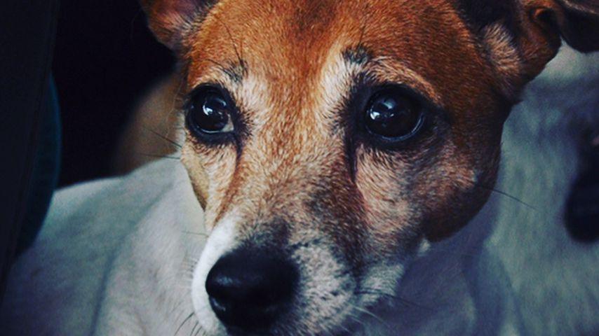 Kendra Wilkinsons verstorbener Hund Martini