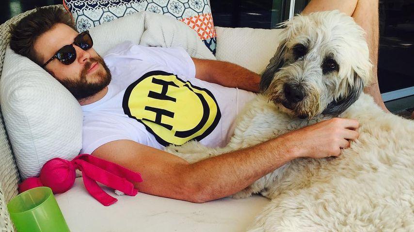 """Liebes-Pic: So cool """"modelt"""" Liam Hemsworth für seine Miley!"""
