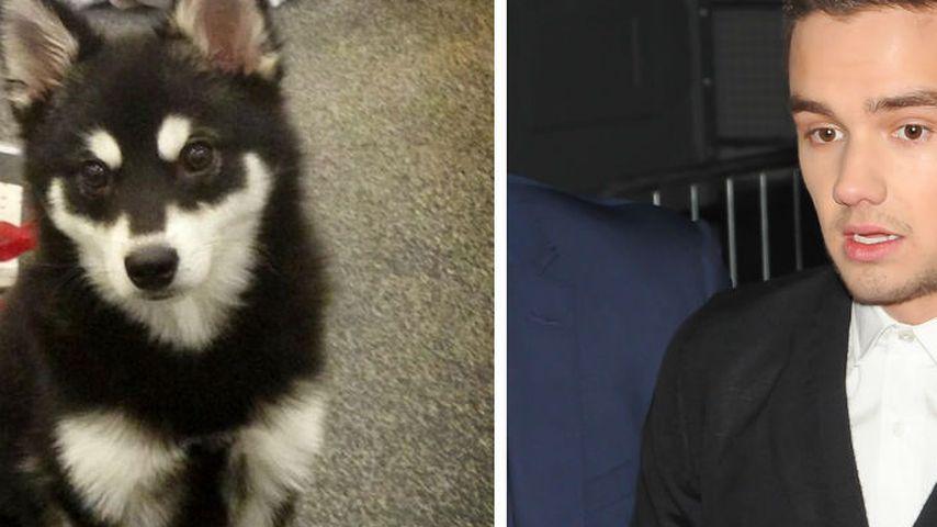 Liam Payne: Sein süßer Hund bekommt Morddrohungen