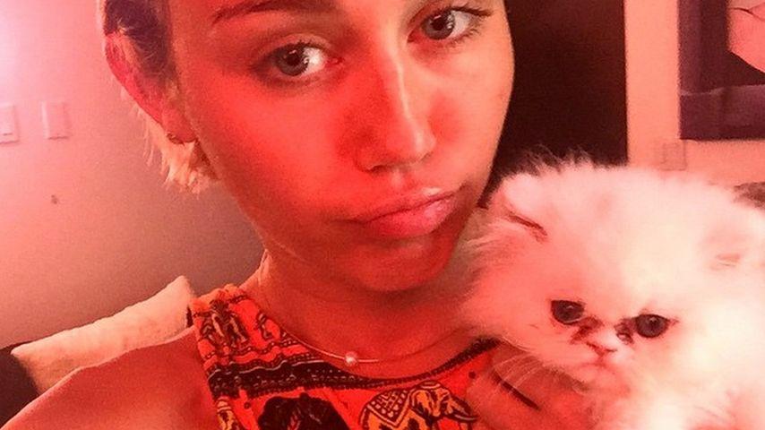 Katzen-Kritik: Pflegt Miley Cyrus ihr neues Haustier nicht?