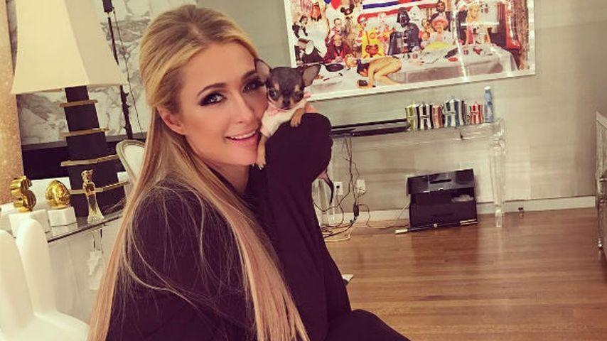 Paris Hilton und ihr Chihuahua-Welpe
