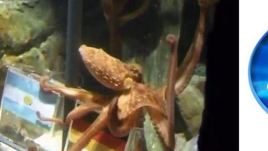 Kraken-Orakel Paul als neuer DSDS-Juror?