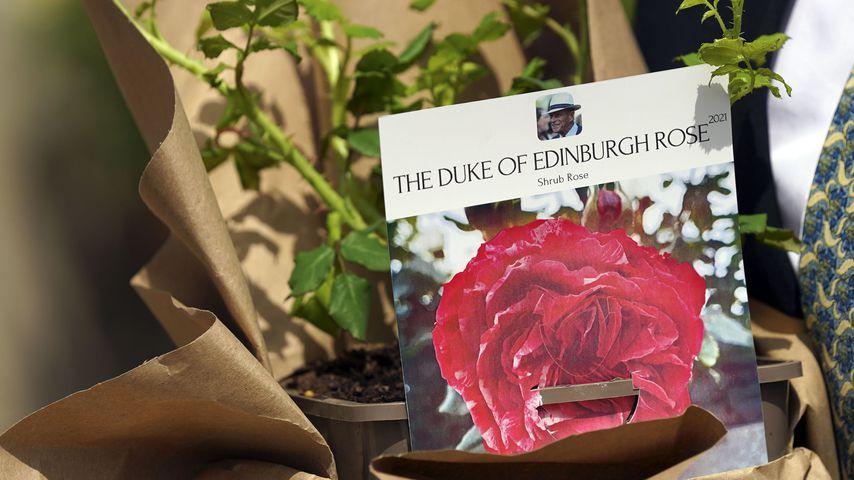 Eine Rose zu Ehren von Prinz Philip