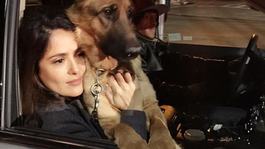 Salma Hayek mit ihrem Hund Mozart