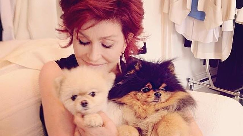 Sharon Osbourne kuschelt mit ihren Hunden