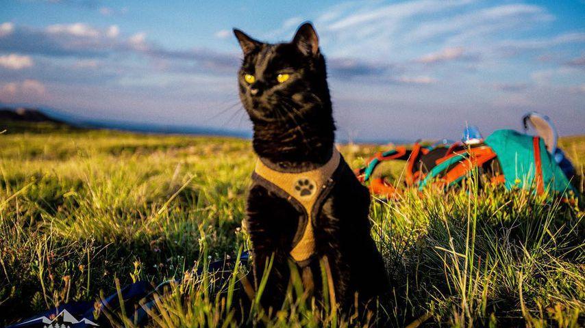 Backpacking Kitty: Reisender Kater Simon erobert das Netz!