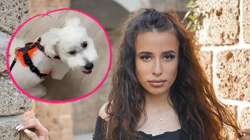 """""""Temptation Island""""-Sirias Hund fraß ihre benutzte Unterhose"""