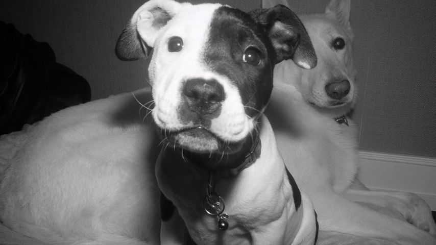 Sophie und Dolly, Justin Theroux' und Jennifer Anistons Hunde