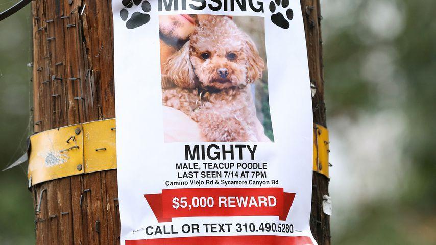 Suchplakat von Orlando Blooms Hund Mighty