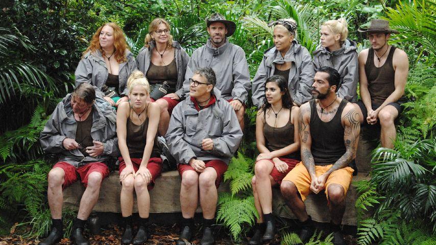 Nach Angelina: SIE muss den Dschungel verlassen